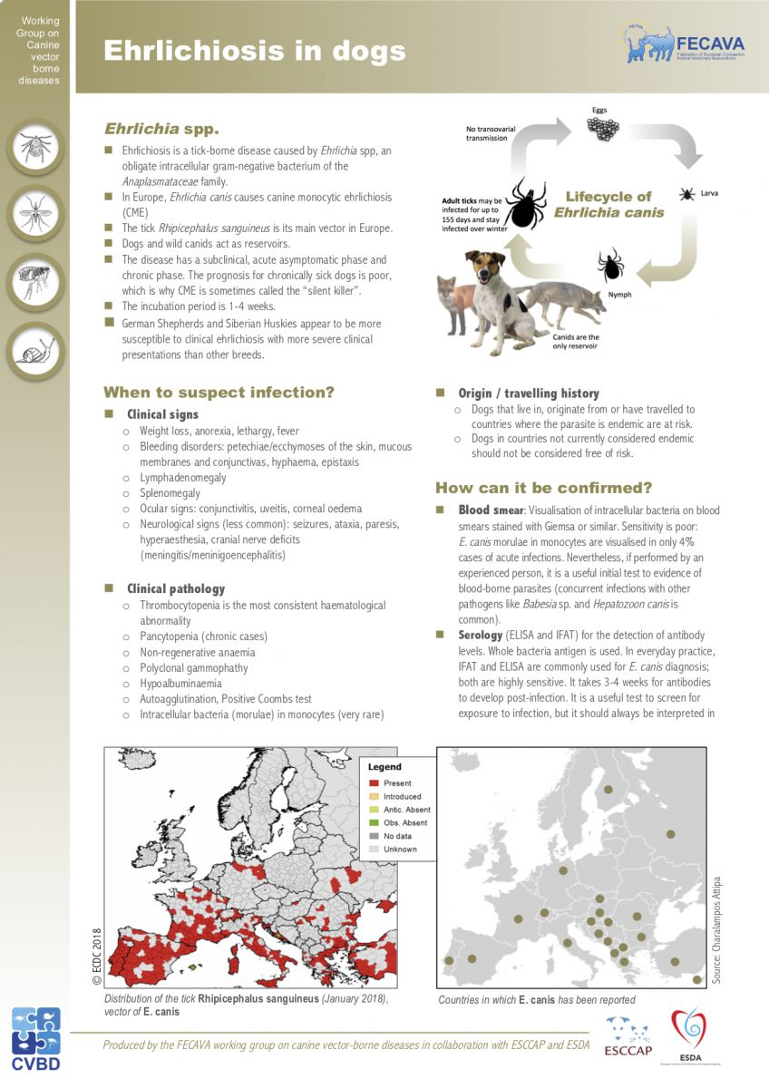 Factsheet on Ehrlichiosis in dogs (February 2019)